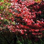 Arboretum kroz godisnja doba
