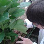 Hortikulturna terapija